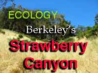 Ecology of Berkeley's Strawberry Canyon